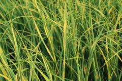 gräshav Arkivfoto