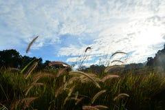 Gräshimmellopp i Thailand Arkivbild