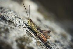 Gräshoppa- eller gräshoppasammanträde på en vagga i solen fotografering för bildbyråer