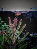 Gräshoppa i en växt fotografering för bildbyråer
