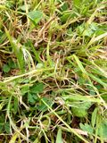 Gräshoppa i gräset Royaltyfri Fotografi