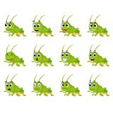 Gräshoppa med olika ansiktsuttryck Royaltyfri Fotografi