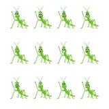 Gräshoppa med olika ansiktsuttryck Royaltyfria Foton