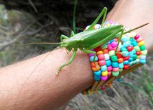 Gräshoppa på en hand Royaltyfri Fotografi