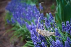 Gräshoppa som är handgjord på blommor Fotografering för Bildbyråer