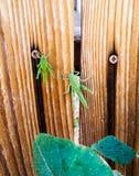 gräshoppor Royaltyfri Fotografi