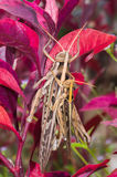 Gräshoppor går till att föda upp i trädgården Royaltyfria Bilder
