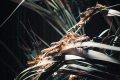Gräshoppor och vegetation Arkivfoto