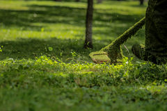 Gräsklippare Arkivbild