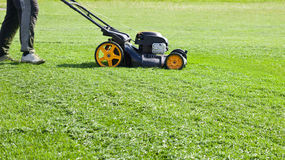 Gräsklippare som arbeta i trädgården, trädgård, gräsklippningsmaskin Royaltyfri Bild