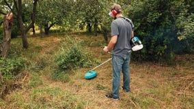 Gräsklippare som klipper grönt gräs i fruktträdgård genom att använda radbeskäraren stock video