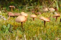 Gräsklippningsmaskin` s plocka svamp i mossa Arkivfoton