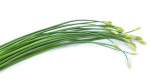 Gräslökar blomma eller kinesgräslök Arkivfoton