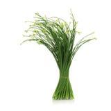 Gräslökar blommar eller den kinesiska gräslöken som isoleras på vit bakgrund Fotografering för Bildbyråer