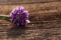 Gräslökblomning Royaltyfria Bilder