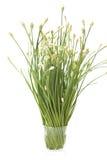 gräslökvitlökexponeringsglas Royaltyfri Fotografi