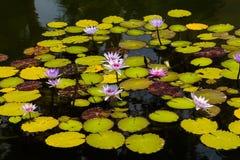 gräslaken planterar vatten Fotografering för Bildbyråer