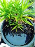 gräslaken planterar vatten arkivfoton