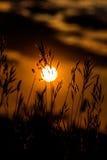 Gräslandskap i det underbara solnedgångljuset Arkivfoto