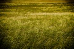 gräslawn Royaltyfria Bilder