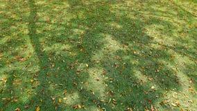gräsleaves Royaltyfri Foto