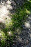 Gräslinjer abstrakt bakgrund 50,6 Megapixels 6480 för makro med 4320 PIXEL arkivfoton