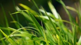 Gräsljus - gräsplan Arkivbild