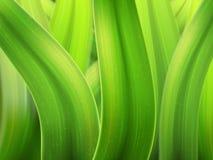 Gräsmakrobakgrund Arkivbilder
