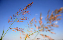 gräsmarsh Arkivbild