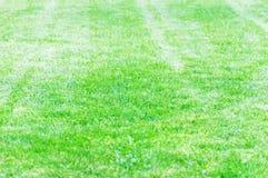 Gräsmatta av ett landshus klippte trevligt med en gräsklippare Fotografering för Bildbyråer