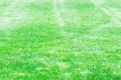 Gräsmatta av ett landshus klippte trevligt med en gräsklippare Royaltyfri Foto