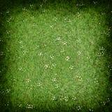 Gräsmatta för grönt gräs Arkivfoto