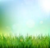 Gräsmatta för grönt gräs med soluppgång på blå himmel Blom- naturvårbakgrund Fotografering för Bildbyråer