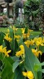Gräsmatta för Longwood trädgårddrivhus fotografering för bildbyråer