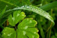 Gräsmatta för makrovårgräsplan med dagg Royaltyfri Foto