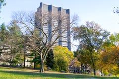 Gräsmatta i Central Park vid den övreöstliga sidan i den 100. gatan Royaltyfria Bilder
