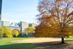 Gräsmatta i Central Park vid den övreöstliga sidan i den 100. gatan Fotografering för Bildbyråer