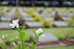 Gräsmatta i en kyrkogård med gravstenar Arkivbild