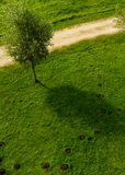 Gräsmatta med mullvadshögar och ett träd arkivfoto