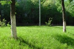Gräsmatta parkerar, träd, arkivfoton