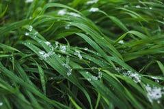 Gräsmatta som täckas med snö Arkivfoton