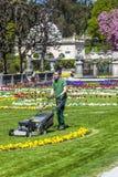 Gräsmattaflyttkarlmaskinen förbereder gräsplanen i Mirabelle Gardens Royaltyfria Foton