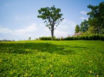 Gräsmattan med det gröna trädet i vår Royaltyfri Bild