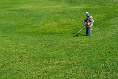 Gräsmattaomsorg Bitande gräs royaltyfri foto