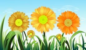 gräsmedelsolrosyellow Stock Illustrationer