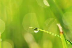 gräsmorgon royaltyfri fotografi