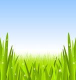 gräsmorgon Royaltyfri Bild