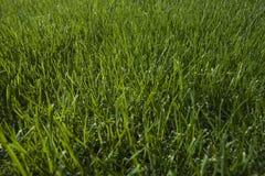 Gräsnärbild Royaltyfria Bilder