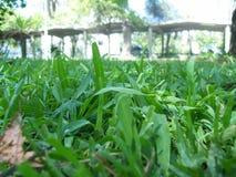 Gräsnärbild Arkivfoto