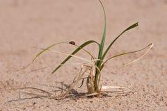 gräsnyckelpigasand royaltyfria foton
